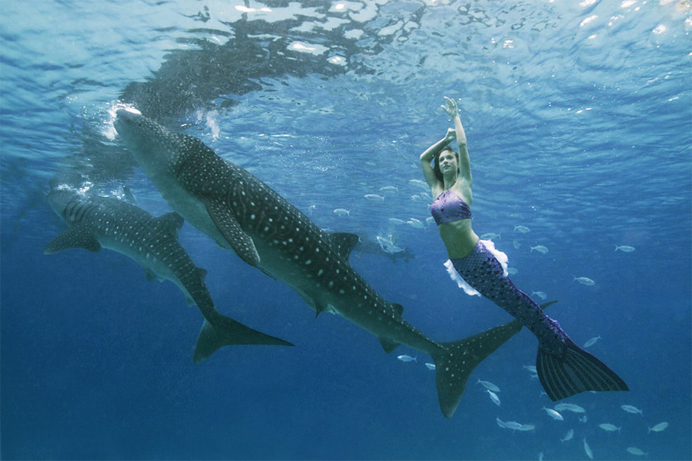 Professional underwater mermaid model Kat swimming with whale sharks in the Philippines