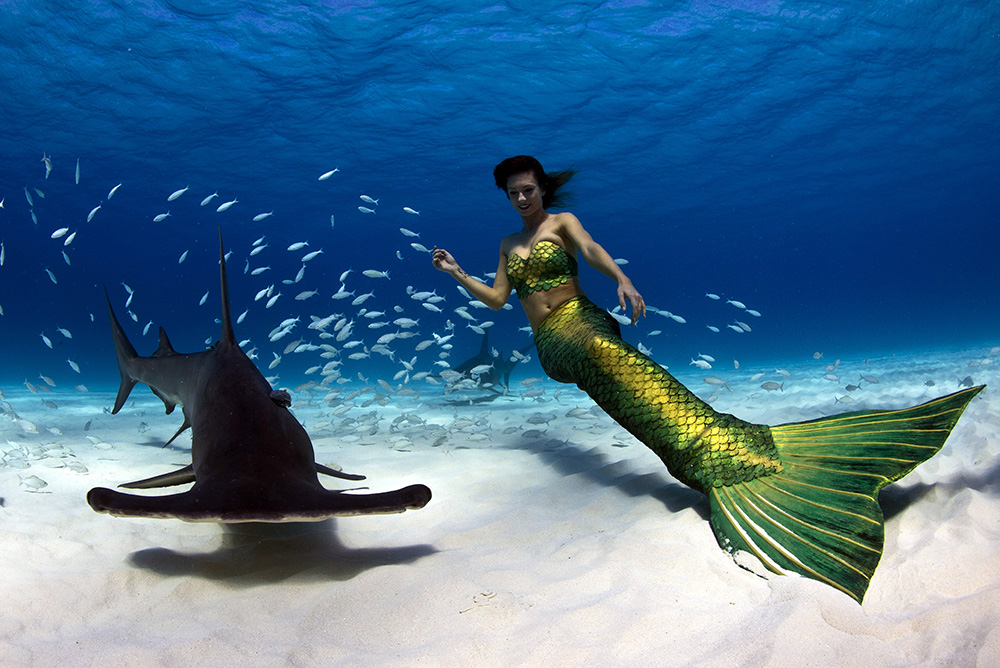 Real Life Mermaid Kat swimms with Hammerhead Sharks in the Bahamas