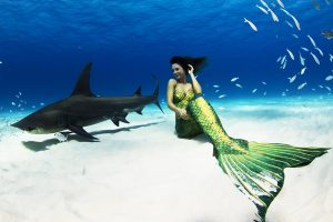 First professional freediving mermaid swimming with tiger sharks
