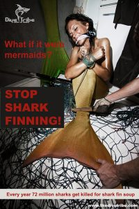 Mermaid Kat against shark finning