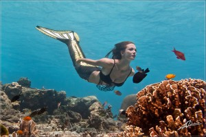 Mermaid Kat in her clown trigger fish mermaid tail