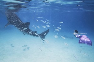 Mermaid Kat swimming with a whale shark in the Philippines