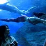 Mermaid Kat swims for sharks