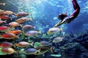Mermaid Kat swims in Aquaria KL to stop shark finning