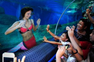 Mermaid Kat swims in shark tank in Thailand to stop finning