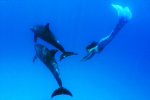 Mermaid Kat swims with wild dolhins in the Red Sea