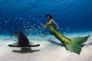 Mermaid Photo Gallery of Professional Mermaid Kat