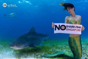 No shark fins with Mermaid Kat