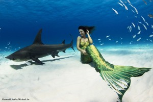Professional Mermaid Kat and hammerhead shark