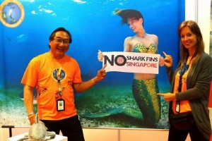 Professional Mermaid Kat says no to shark fin soup