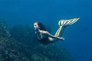 Professional Mermaid Kat swims underwater in her clown triggerfish mermaid tail