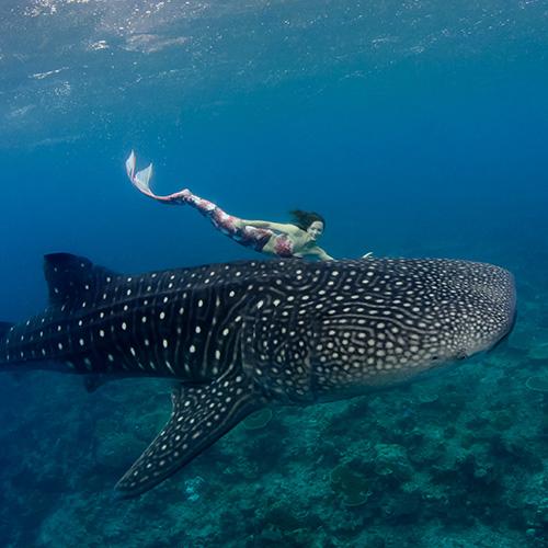 Underwater modeling tips - respect marine life