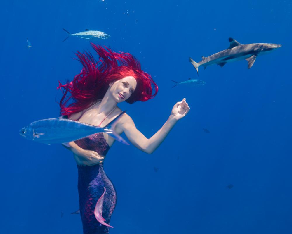 Mermaid Kat swims with sharks - Photo by Ian Gray