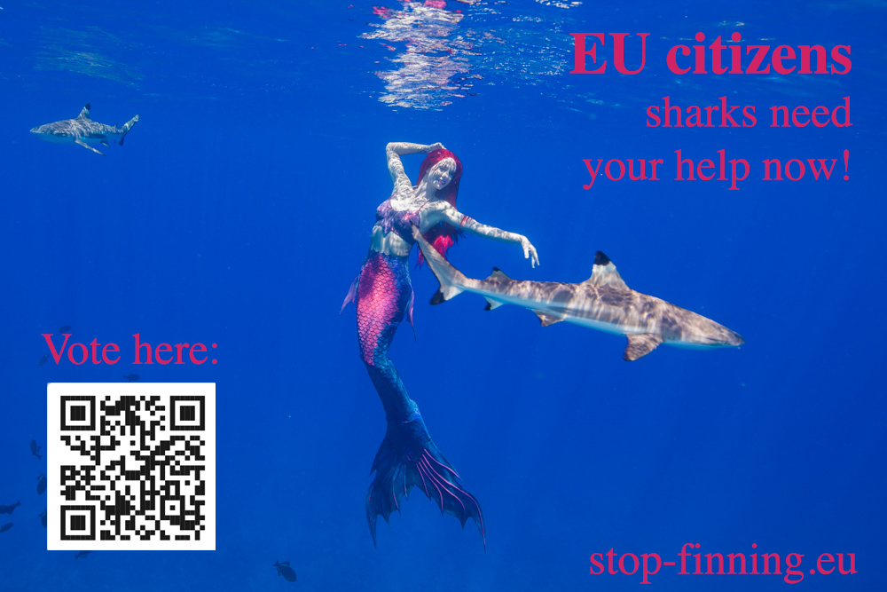 Helping Sharks Worldwide – EU Citizens can vote now!