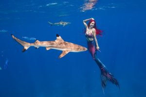 Underwater Stuntwoman and Mermaid from perth swims with sharks
